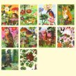 画像3: CHRONICLE BOOKS クロニクルブックス ナタリーレテ グリーティングカード 20枚セット / フォレストライフ 【標準小売価格:2,500円】 (3)